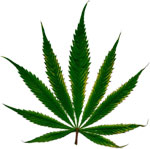 cannabis_leaf-feature